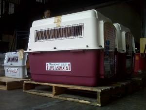 Gould crates