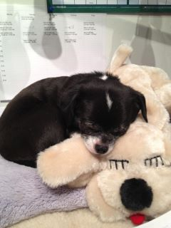 Cooper with his Snuggle Puppy - World Pet Travel