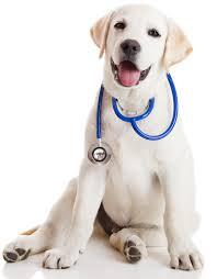 veterinarian 2