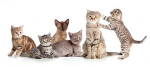 various-cats-group-isolated-white-57259020