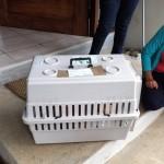 unsafe cat crate
