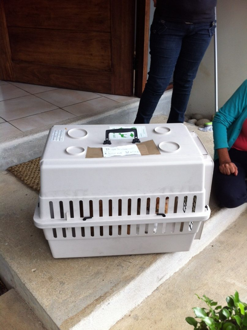 Cat Crates For Air Travel