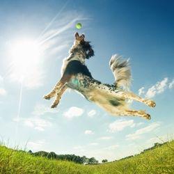 Pets in flight!!!