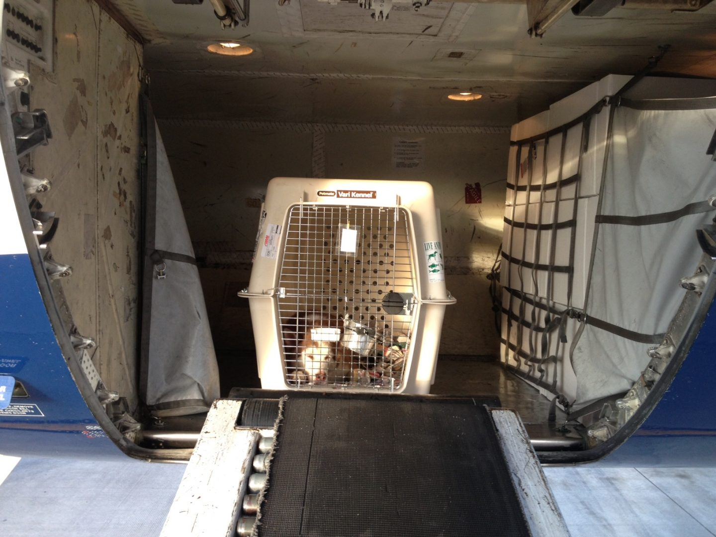 Pets as cargo world pet travel for Airlines that allow dogs in cabin