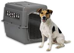 dog 2 in crate