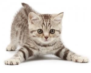 playful_kitten