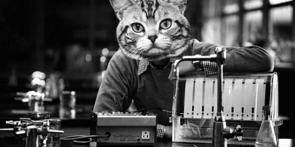 Cat Homework