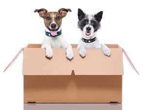 World Pet Travel Pet Transportation Service Specialists Services