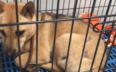 Yulin Dog Rescue
