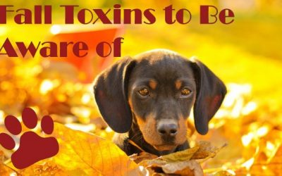 Poisons for Pets at Christmas Time