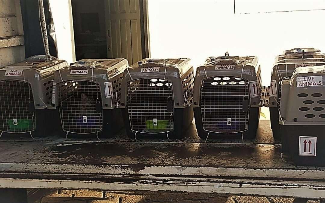 6 Kitties From Nicaragua to Costa Rica