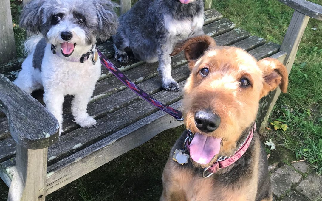Molly, Penny & Daisy's Big Move from London to Michigan