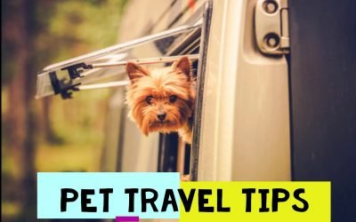 Summer Pet Travel Tips: Ground Transportation