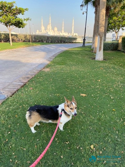 Pippa's Move from Texas to the UAE