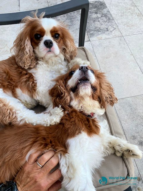 Max & Charlie's Move from USA to Australia